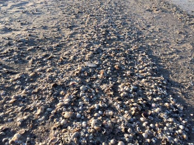 bieganie nad morzem (3)